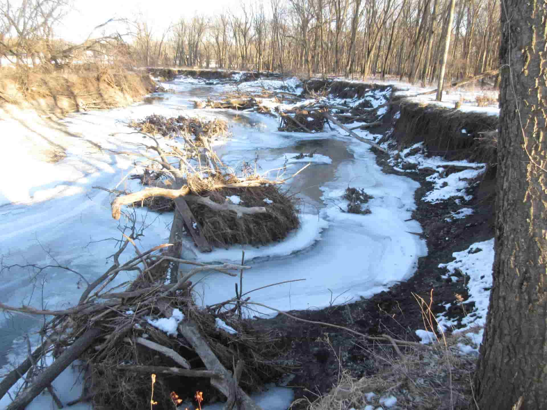 """Before"" picture: Snow over an impacted stream with broken trees"