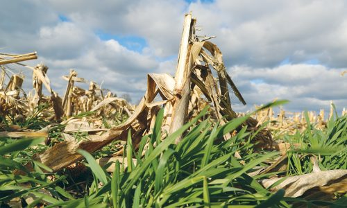 Southeast Iowa Farmer Suggests Low-Cost Tweaks To Planter For Seeding Into A Rye Cover Crop