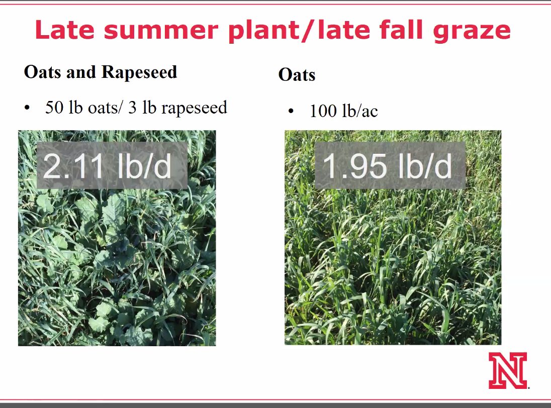 Better gain from late summer plant to late fall graze.